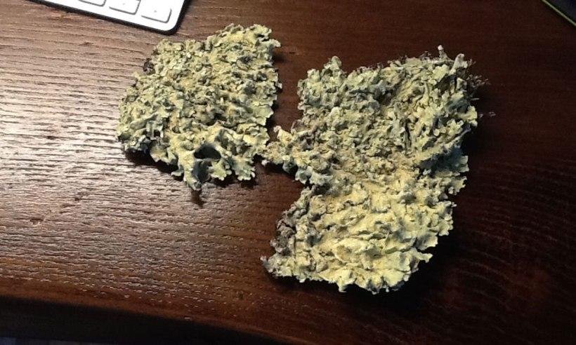 rock-lichen